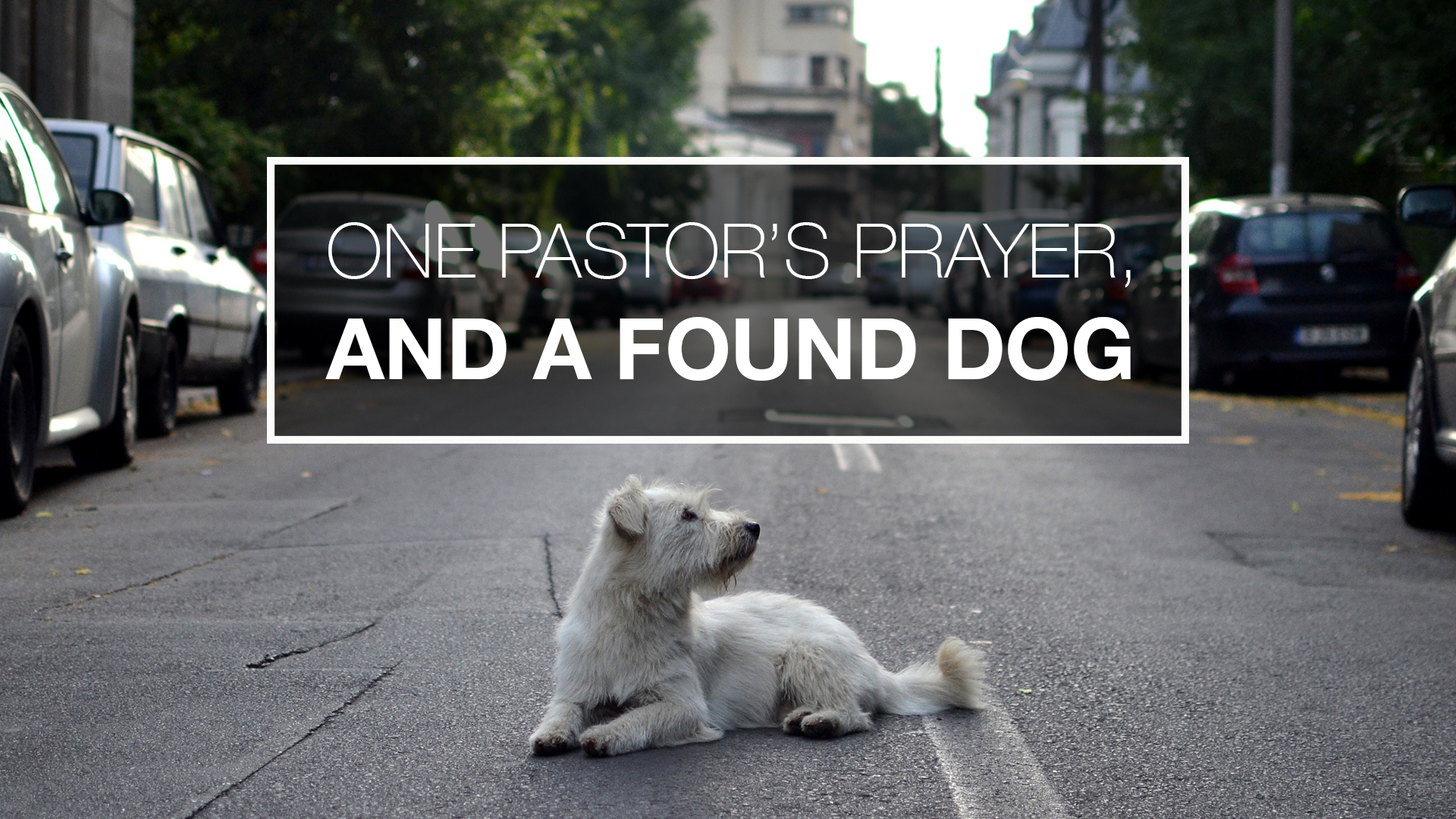 One Pastor's Prayer, And a Found Dog